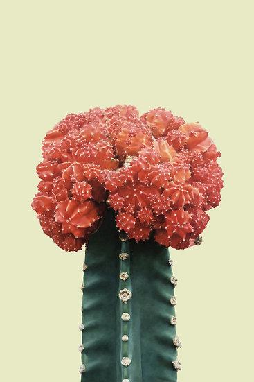 Red Cactus, Cactus Blossom Poster, Botanical Print Digital Download