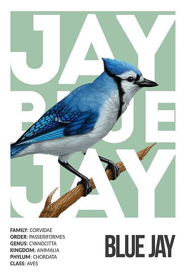 Blue Jay Print, Wildlife Art, Bird Prints, Blue Jay Painting Digital Download