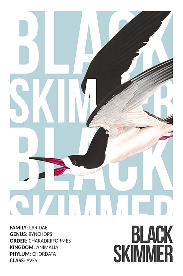 Black Skimmer Art Poster, Bird Prints, Colorful Bird Digital Download