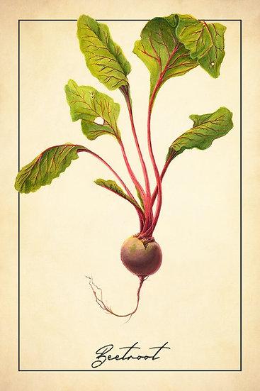 Beetroot Print, Botanical Wall Art, Beetroot Illustration Digital Download
