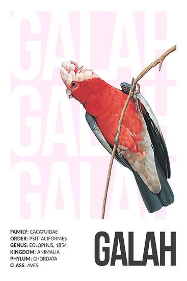 Galah Print Digital Download, Bird Printable Art, Galah Watercolor, Wildlife Art