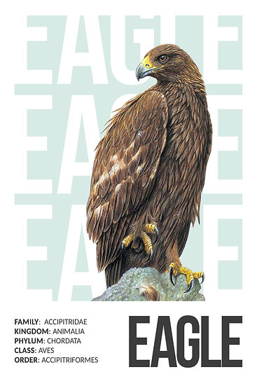Eagle Poster, Bird Prints Wall Art, Eagle Wall Decor Digital Download