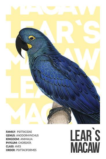 Parrot Lear's Macaw Print, Parrot Poster, Tropical Bird Art Digital Download