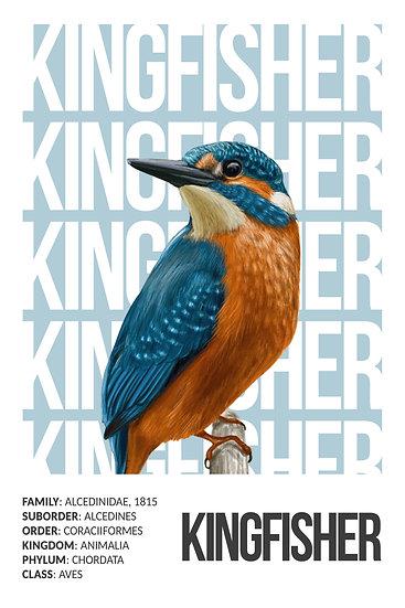 Kingfisher Printable Poster, Animal Wall Art, Colorful Bird Digital Download