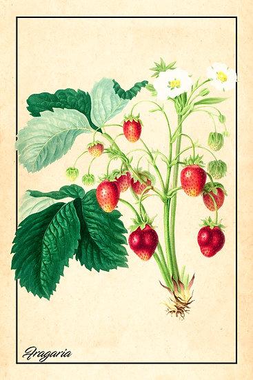 Wild Strawberry Botanical Art, Fragaria Poster Digital Download, Berry Print