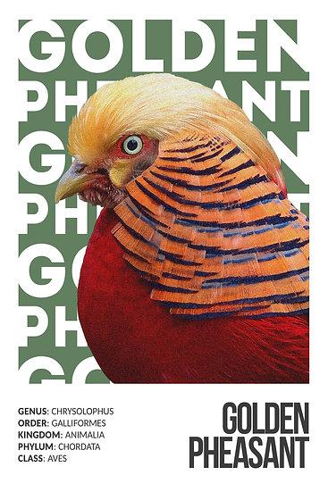 Golden Pheasant Printable Wall Art, Pheasant Print Digital Download, Bird Prints