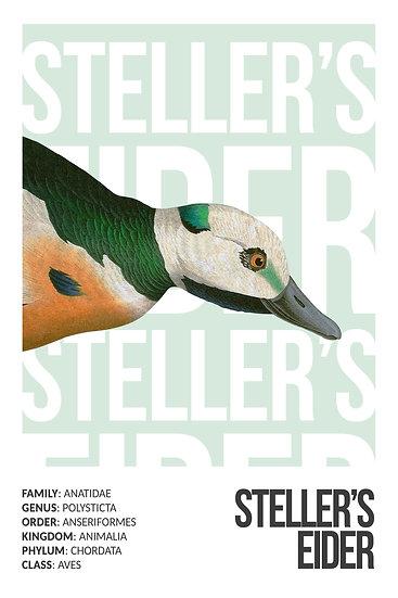 Steller's Eider Art, Sea Duck Print, Bird Prints, Duck Wall Art Digital Download