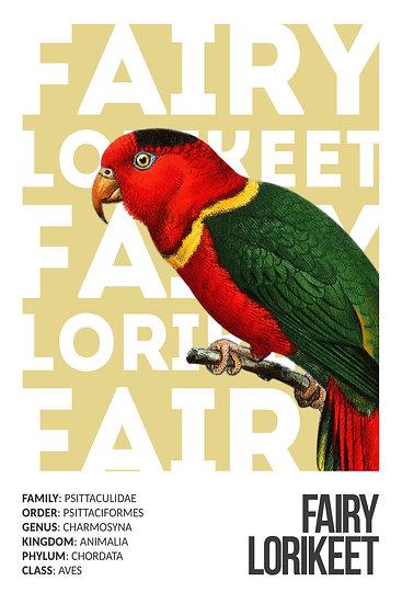 Fairy Lorikeet Poster, Exotic Birds, Lorikeet Digital Download, Bird Prints