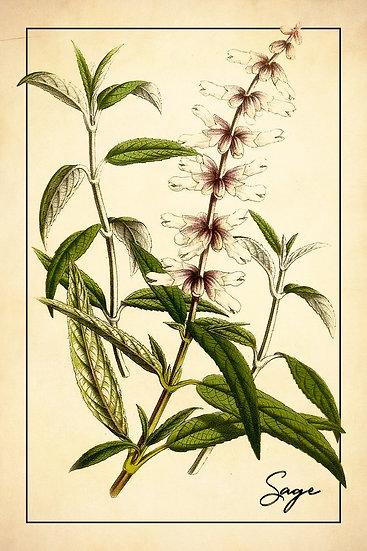 Farmhouse Sage Print, Sage Botanical Poster, Kitchen Wall Decor Digital Download