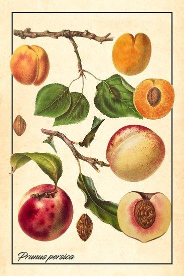 Peach Print, Fruit Wall Art, Peach Fruit Kitchen Decor Digital Download