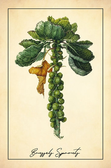 Farmhouse Kitchen Wall Art - Brussels Sprout Poster Digital Download