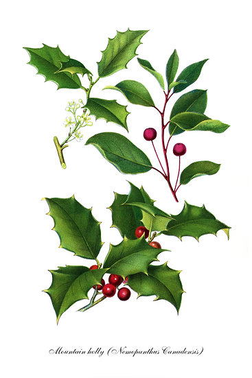 Catberry Botanical Poster, Wildberry Print Digital Download, Farmhouse Decor
