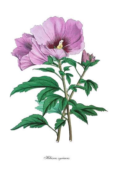 Hibiscus Print, Botanical Wall Art, Hibiscus Poster Digital Download