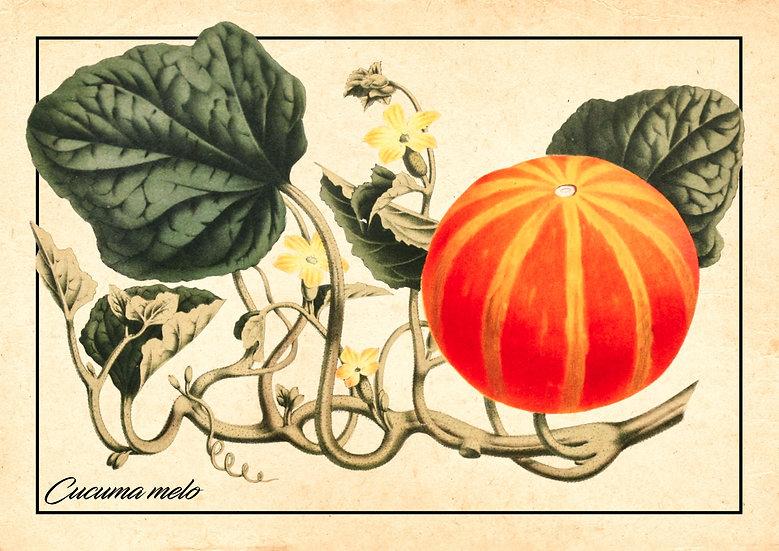 Pumpkin Wall Decor, Farmhouse Kitchen, Pumpkin Print Digital Download