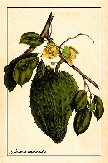 Soursop Botanical Print, Farmhouse Wall Decor, Graviola Poster Digital Download