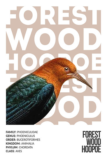 Forest Wood Hoopoe Print, Exotic Birds, Hoopoe Bird Digital Download