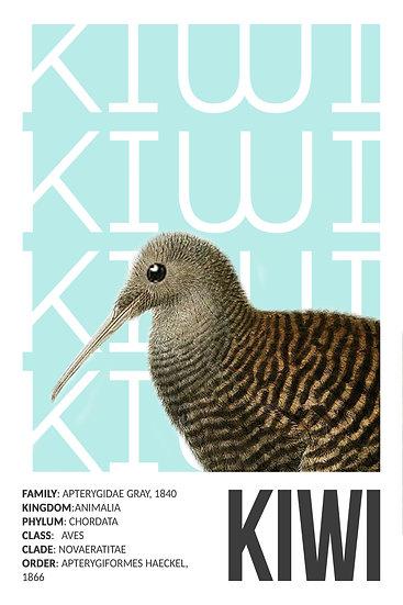 Kiwi Bird Print, Bird Poster, Exotic Birds, Birds Print Digital Download
