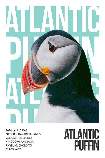Atlantic Puffin Printable Wall Art, Bird Prints, Exotic Birds Digital Download