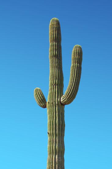 Cactus Poster, Cactus Digital Download, Succulent Print, Botanical Wall Art