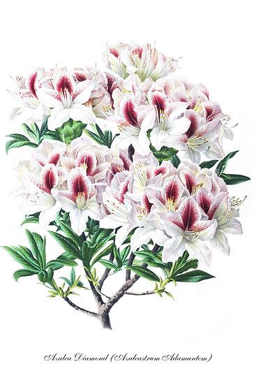 Azalea Print, Rhododendron Poster, Botanical Wall Art Digital Download