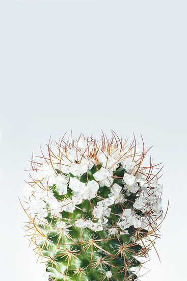 Cactus Blossom, Botanical Print Digital Download, Distressed Farmhouse