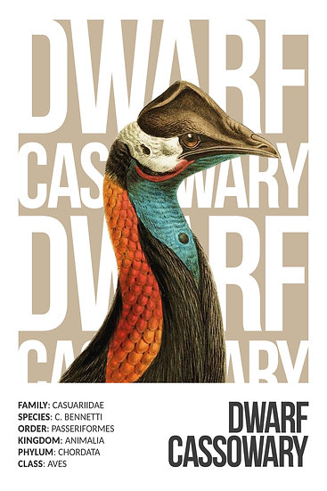 Dwarf Cassowary Printable Wall Art, Bird Prints, Colorful Bird Digital Download