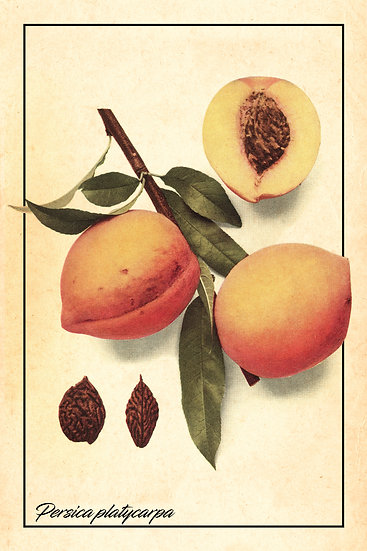 Peach Poster, Botanical Wall Art, Farmhouse Kitchen Decor Digital Download