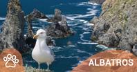 Albatros.png