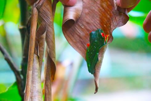 LA FORTUNA | Costa Rica