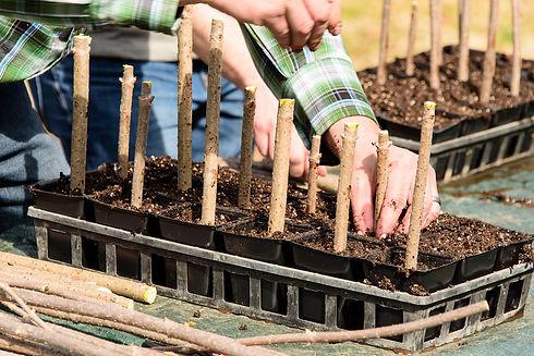 planting flat 3.jpg