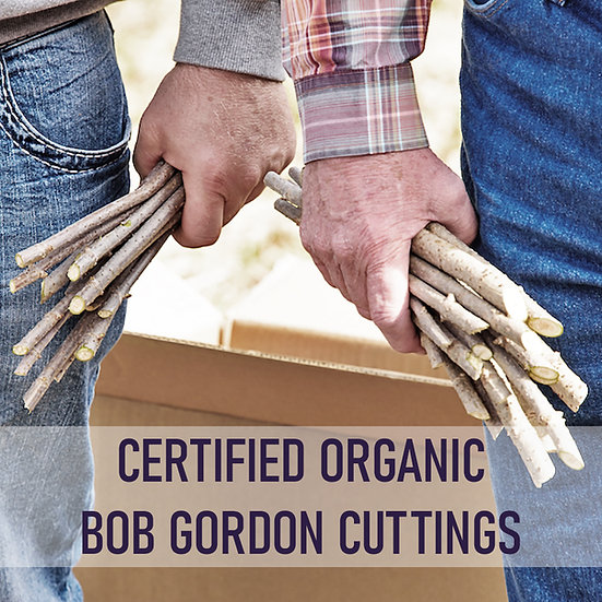 100pk Certified Organic Elderberry Cuttings - Bob Gordon