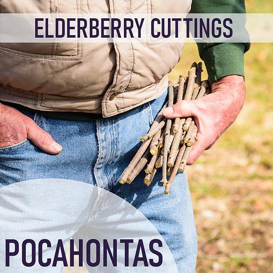PRE SALE 3pk Elderberry Cuttings - Pocahontas