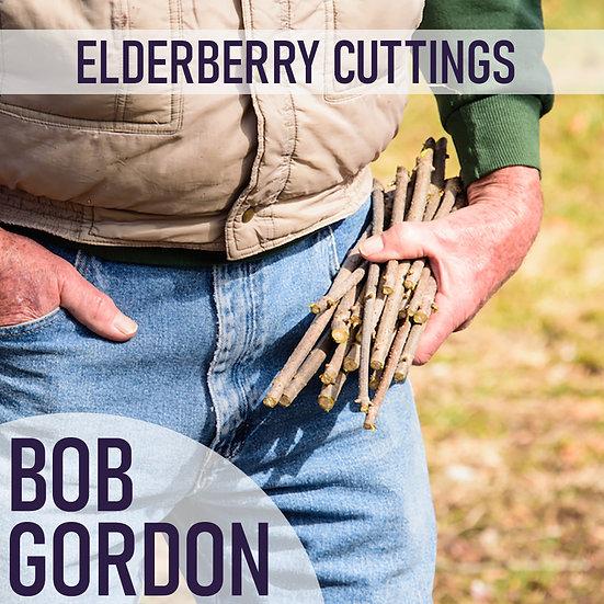 PRE SALE 3pk Elderberry Cuttings -Bob Gordon