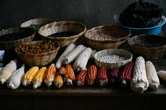 Corn is the Staple food of Guatemala