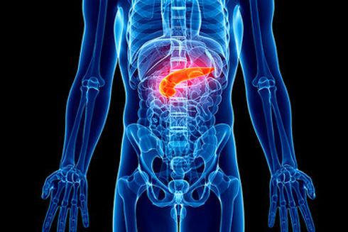 Hormonal_system_pancreas.jpg