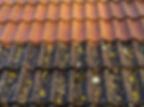 roof-washing-1.jpg