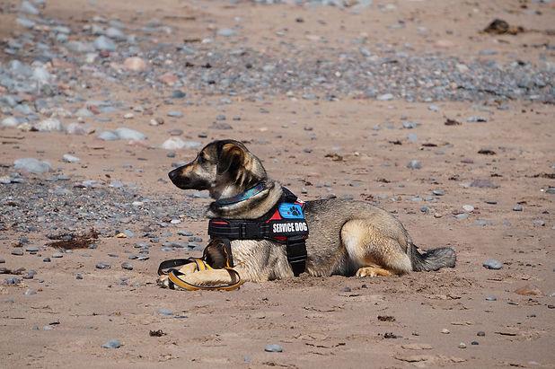 service-dog-5420330_1920.jpg
