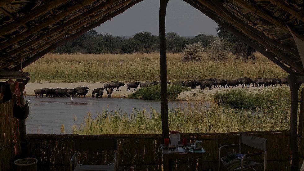 buffalos_buffalo_camp_mwaleshi.jpg