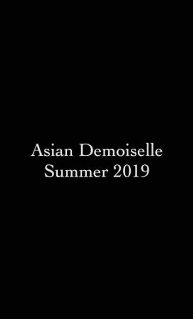 Asian Demoiselle Summer 2019