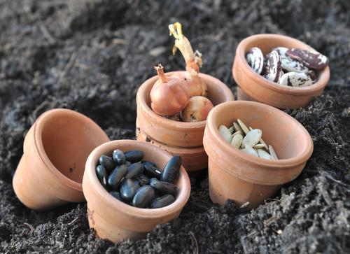 Durée de vie des graines potagères