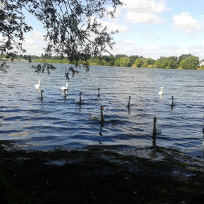 Swimming is only an option for the birds