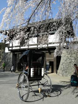 桜と門と人力車