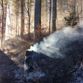 Waldbrand-Management auf der Alpennordseite
