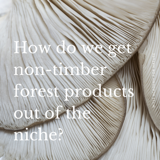 We need your help: How do we get non-timber forest products (NTFP) out of the niche? Non-Timber Forest Products (NTFP) - such as mushrooms, berries, syrup or cork - can offer multiple benefits for communities involved in their harvesting or trade. Yet, they have difficulties in competing on the market, due to comparatively low volumes, seasonal availability, irregular supply and variations in quality. Joining forces in cooperatives can support people involved, such as ensuring a constant and sufficient supply and creating economies of scale.  Cooperatives can also process and market the manufactured products (that have a longer shelf life and thus permit a more continuous supply), thus eliminating some of the intermediaries who in general take a large share of the final market value of the product.
