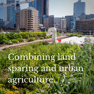 Have you heard of land sparing? It means making farmed landscapes as beneficial to wild species as possible, by practicing higher-yield agriculture that requires a smaller area. How about combining this concept with urban agriculture?!   Increasing the share of agriculture performed in urban areas can have the potential of reducing the demand on rural land to produce food. This gain could potentially be amplified by making a larger non-agricultural area available to wildlife (land sparing), or by expanding the use of a land-sharing form of agriculture, where farming activity is limited so that it can co-exist with local species. (Peri)-urban farming could have the potential of complementing the overall range of solutions available to achieve a better balance between food production (even food sovereignty), conservation and environmental justice.