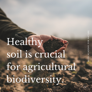 How can multi-functionality in agricultural production, the idea that agriculture has many functions in addition to producing food and fibre, e.g. environmental protection, rural employment, food security, etc., be realised, safeguarding biodiversity? Soil is perhaps one of the most affected and important dimensions when talking about agricultural landscapes and biodiversity. After being ignored for many decades, soil biodiversity is recently recognised but still considered in a utilitarian way, due to its many key functions in agricultural production.  Therefore, maintaining and restoring healthy soils with their associated biodiversity should be a priority from a multifunctional landscape perspective at the farm plot level. What are your priorities in multi-functionality in agricultural production?