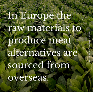The food industry reports a clear trend towards the production of high-protein plant-based meat alternatives for human consumption. The sector has grown from USD 3.19 billion in 2013 to an estimated USD 5.96 billion in 2022.   Sounds good?   Well, unfortunately there is a downside: In Europe, for example, to a large degree, the raw materials needed to produce meat alternatives are sourced from overseas, which has an impact on emissions. Also, soy and other plants rich in protein often derive from non-sustainable production, which has given rise to discussions around how to produce them locally.  We believe that the question of self-sufficiency with plant-based proteins for human consumption requires an holistic assessment - taking into consideration those plants which are best suited for ecological production, their nutrional and psychological potential, and the steps required to process them into protein concentrates and isolates.   How does your country meet the challenge of an increasing demand for plant-based meat alternatives?