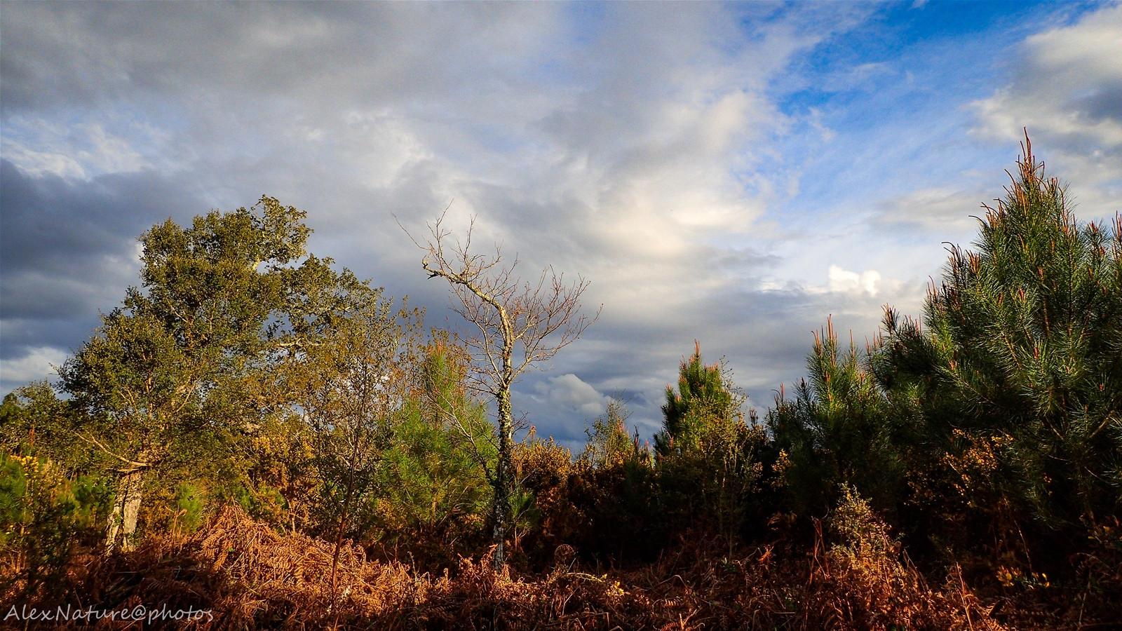 Pluie en prévision sur la forêt landaise