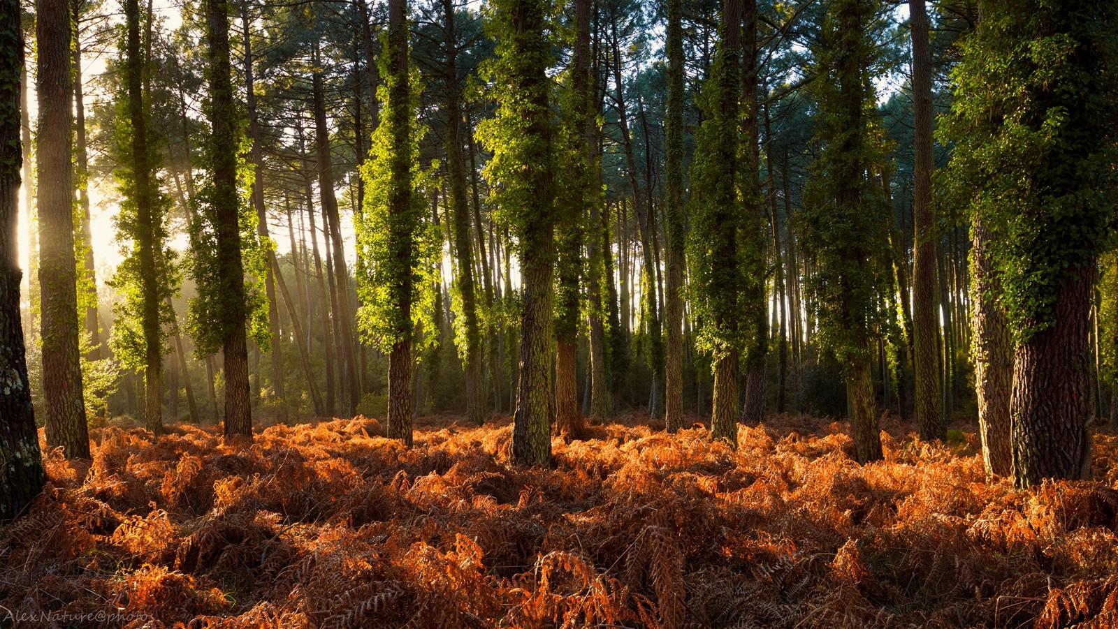 Bienvenue dans la forêt landaise...