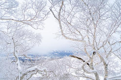 Au travers les arbres du Japon